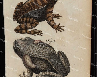 Amphibians hand colored engraving from Natural history of Buffon  dates 1790 Over 200  (Fold out print)