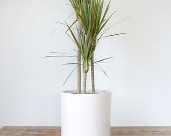 Indoor Planter - White   Large Plant Pot   Tall Ceramic Cylinder   Perfect for Indoor Plants, Succulents, House Plants & Plant Stands
