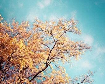 nature photography fall leaves 8x10 8x12 autumn leaves tree photography fine art botanical photography golden teal autumn tree orange yello