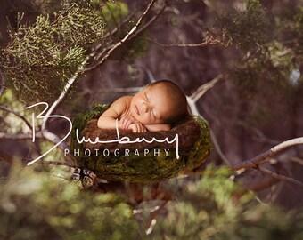 Newborn Birds nest digital Background