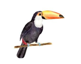 Toucan Print, Watercolour Toucan, Tropical Bird Art, Bird with Large and Colourful Bills, Watercolour Tropical, Watercolor Bird Art