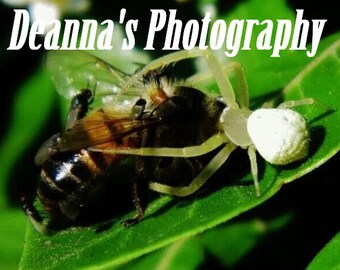 Araña come abejas por Deanna Bernal