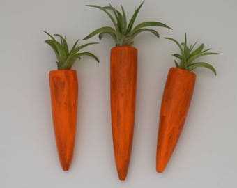 Carrots by the Bunch Wood Air Plant Holder w/ Air Plant