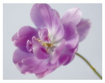 Purple Tulip Photo Card, Fine Art Blank Card, Tulip Photograph, Flower Greeting Card