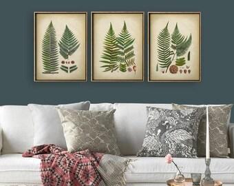 FERN BOTANICAL Print SET of 3 Art Posters, Botanical Set, Fern Print Set, Wall Decor, Green Plants Art, Wood  Forest Art, Fern Art, Fern Set