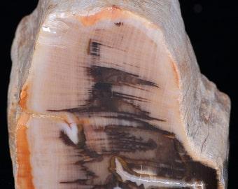 Beautiful Polished Fluorescent Petrified Wood Limb Cast