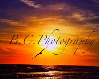 Seagull in sunset, Long Beach, New York
