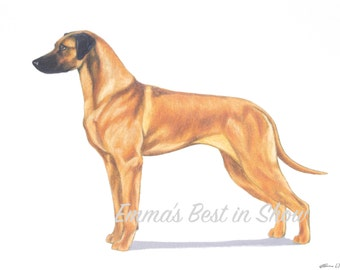 Rhodesian Ridgeback Dog - Archival Fine Art Print - AKC Best in Show Champion - Breed Standard - Hound Group - Original Art Print