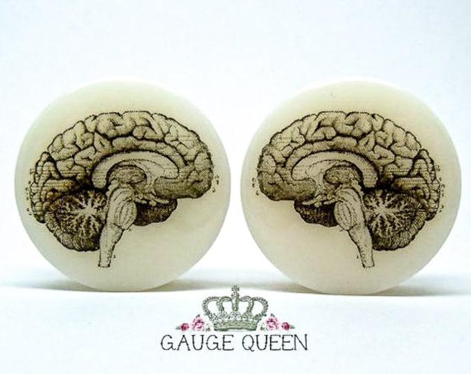 "Anatomical Brain Plugs / Gauges. 4g /5mm, 2g /6.5mm, 0g /8mm, 00g /10mm, 1/2"" /12.5mm, 9/16"" /14mm,5/8"" /16mm,3/4"" /19mm,7/8"" /22mm,1"" /25mm"