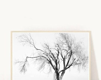 Minimalist Art, Photography, Winter Photograph, Printable Art, Nature Print, Black and White Photo, Abstract Print, Digital Download
