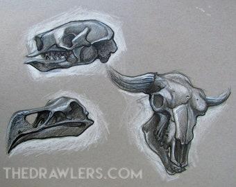 Ancient Skulls Art Print Mini