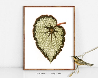 PRETTY LEAF 2 - digital image download - printable antique plant illustration retooled by Anamnesis - image transfer - totes, pillows