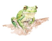 Tree Frog Painting - Prin...