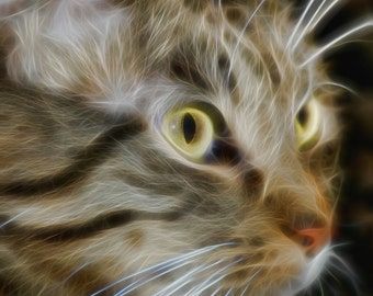 Printable Fine Art Cat Photography *Instant Digital Download*
