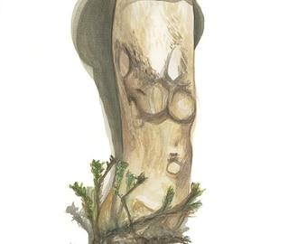 Aspen Scaber Stalk Giclee Print