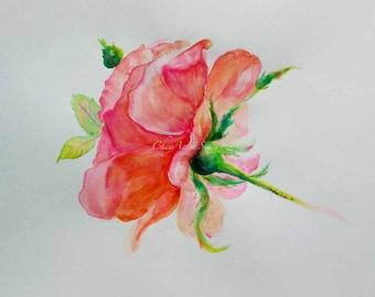 Pink Art Peachy Rose Rosa Blossom 18x24 Oversized wall art ORIGINAL watercolor flower springtime watercolour