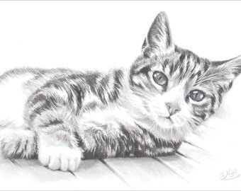 Tabby Cat, Cat Art Print, Pencil Drawing of a Cat. Gift for Cat Lover.