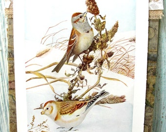 Vintage Book Page, Book Print, Illustration, Bird Print, Lithograph, Color Plate, 1920s Book Page, Bird Art, Bunting, Goldfinch