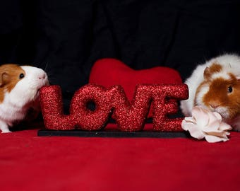 Guinea Pig Love Bookmark