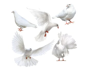 White dove overlay photo animal photoshop png