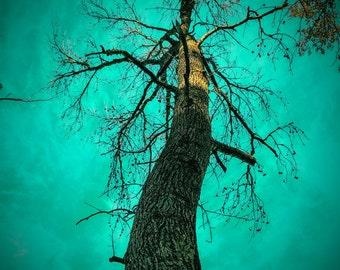 Nature photography, Tree Photography, Lake Sam Rayburn, Texas Lake, Landscape Photography, Colorful Nature Photos, Photography Decor