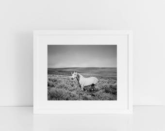 Dramatic Black and White Photograph, White Horse and Storm, Horse Art, Physical Horse Print