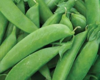 Sugar Snap Pea Seed, Snow Peas, Various Pack Size, NON GMO, Heirloom Seed