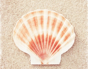 "Seashell Photography - beach sea shell peach beige white shore seashore coastal wall art fine art - 10x10, 8x8 Photograph, ""Scallop Shell"""