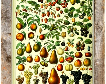Vintage Fruit Poster - vintage  Farmhouse art ~ Kitchen art ~ fruit chart ~ vintage kitchen art ~  Farmhouse poster - fruit poster - baking
