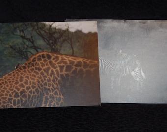 Safari Notecards - Set of 4
