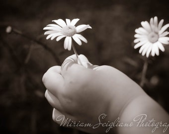 Nursery Photography, Daisy print, countryPhotography, 5x7, black and white photo, kids decor, country photography, farm photography, rustic