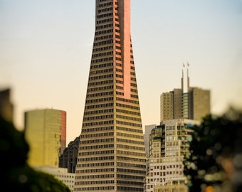 "San Francisco Photography - transamerica pyramid san francisco photos 8x12 bokeh 16x24 landscape photography blue gold 8x10 prints ""Giant"""