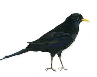 Bird print Blackbird - British garden birds contemporary limited edition print.