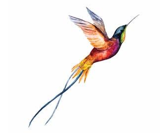 Temporary TATTOO Hummingbird , 50x55 mm size