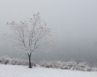 Tree Photography Winter Snow Scene Landscape Minimal Silver Tree Zen