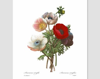 Poppy Art (Flower Nursery, Cottage Chic Living Room, Antique Home, French Bedroom Wall Decor, Red Kitchen, City Loft Artwork) Pierre Redoute