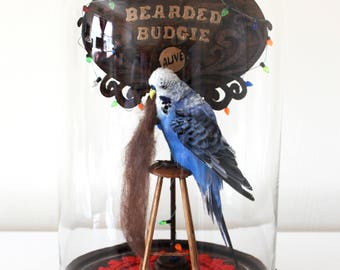 Taxidermy Real Bird Parakeet Blue Anthropomorphic Budgerigar Circus Sideshow Glass Dome Curiosity Oddity Bearded Lady