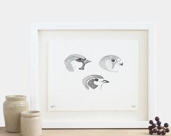 Three Beaks Print - limited edition achromatic monochrome diagram black and white birds
