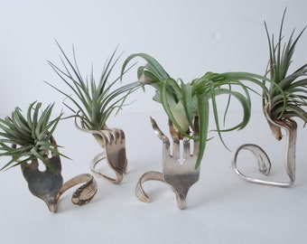 Air Plant- Air Plant Terrarium-Terrarium-Gifts for Women-Gifts for Men-Desk Accesory-Office Accessory