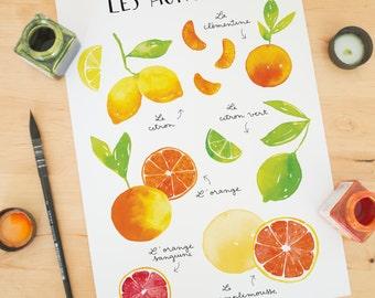 fruit print, Fruit art print, Fruit wall art, fruit poster, citrus fruits, kitchen wall art, kitchen decor, fruit decor, Kitchen art