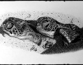 """Sea Turtles """"Siblings"""""""