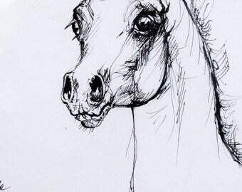 Arabian foal, horse portrait, equine art, equestrian, cheval, original pen drawing