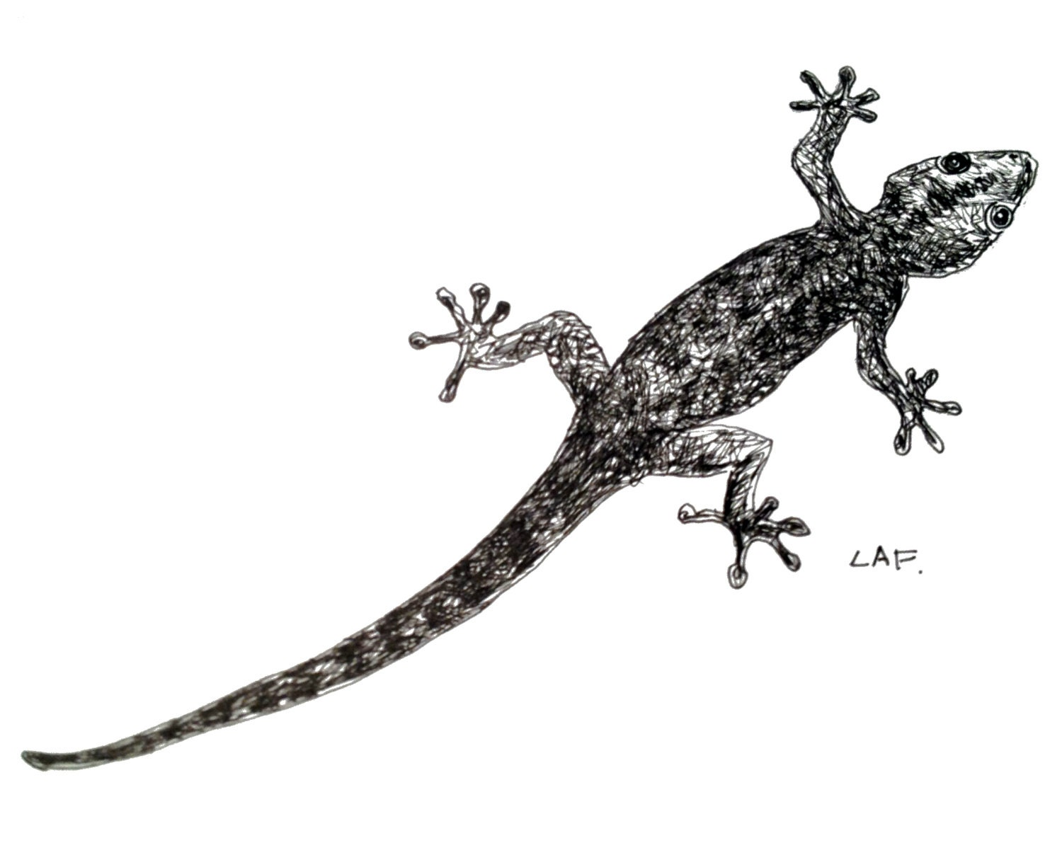 Gecko art gecko printsOriginal Pen and Ink Drawing Limited for House Lizard Drawing  589ifm