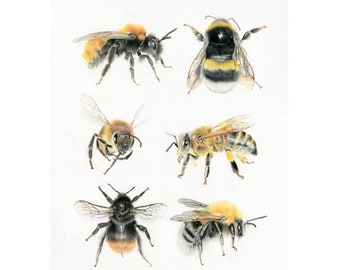 British Bees Limited edition fine art Giclée print. A4 . Percentage of every sale goes to charity.