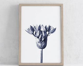 Download of vintage Karl Blossfeldt Botanical photograph, printable art, blue, art, wall prints , photograph, print, printables,