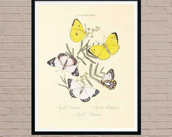 Schmetterlings-Print Art Print, Vintage Schmetterling, Schmetterling, Schmetterling, Schmetterling Wandkunst, Schmetterling Dekor, Kunst, antiken Schmetterling Schmetterling