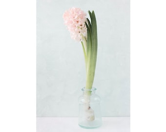Pink Hyacinth Photograph, Still Life Print, Pastel Wall Decor, Pink Flower, French Country Art Print