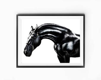 horse photography, horse print, horse decor, dorm decor, nursery animal print, horse poster, horse wall art, horse prints, black horse art