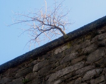 Eastern State Penitentiary, Digital Photography Download, Tree Growing from Wall, Philadelphia Landmark, DIY Home Decor, Instant Download