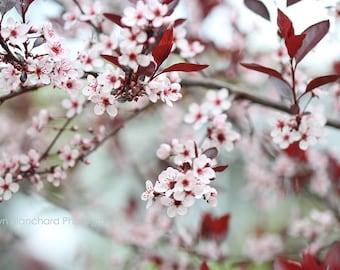 "Printable Photos, Digital Download, Flower Download, Nature Photography, Flower Photography, Photography Printables, JPG, ""Sweet Sandcherry"""